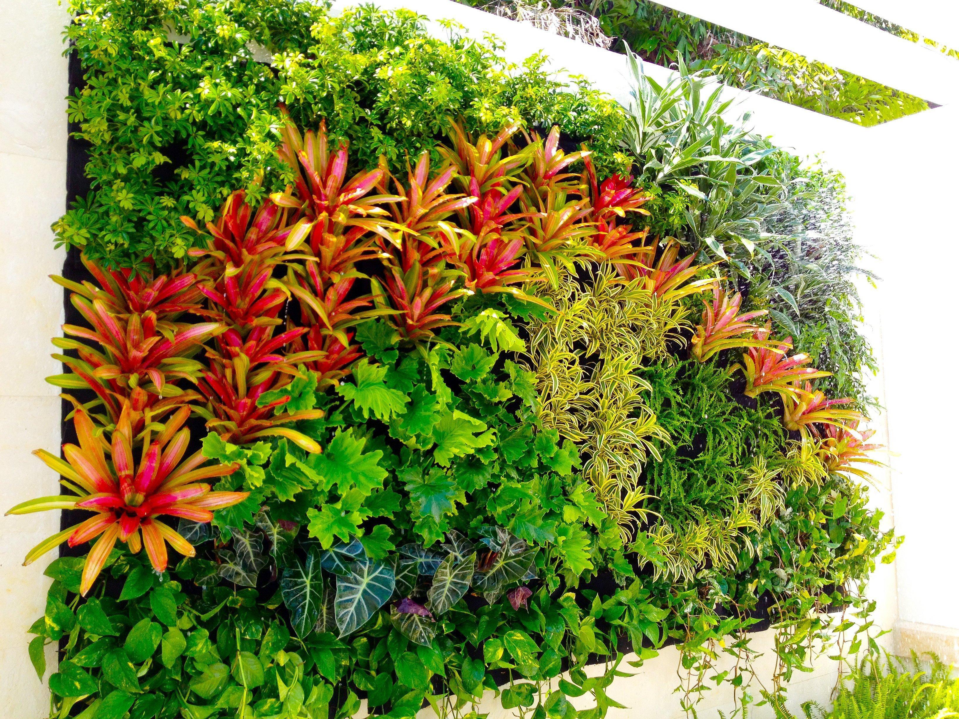 Florafelt Vertical Garden by Jeff Allis of Tru Vine Design.