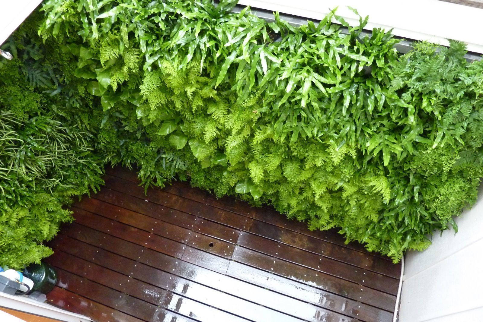 Chris Bribach, Plants On Walls. Fern Well. Florafelt Vertical Garden Planters.