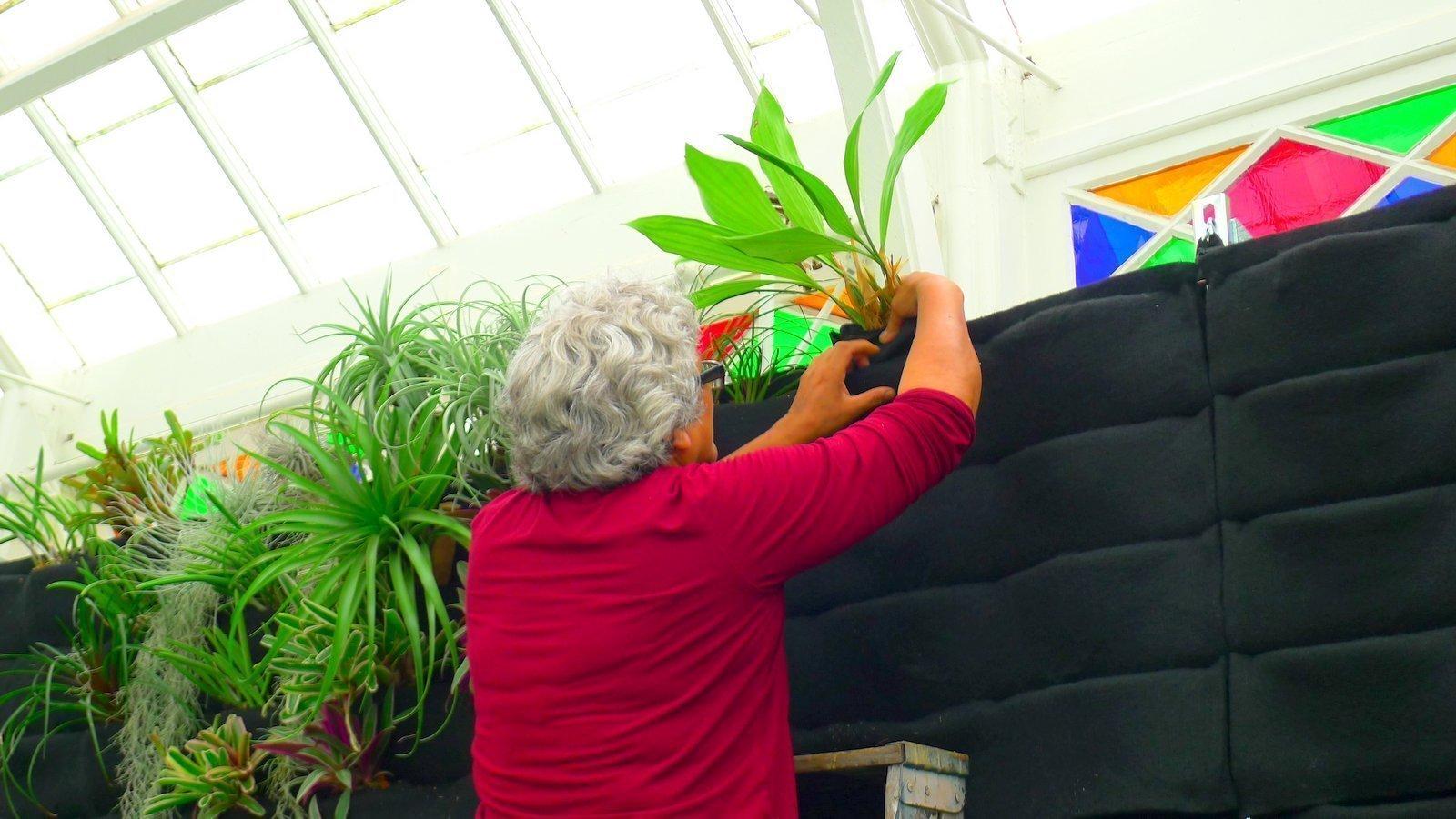 Guadalupe Cota San-Francisco-Conservatory Of Flowers. Florafelt Vertical Garden Planters.