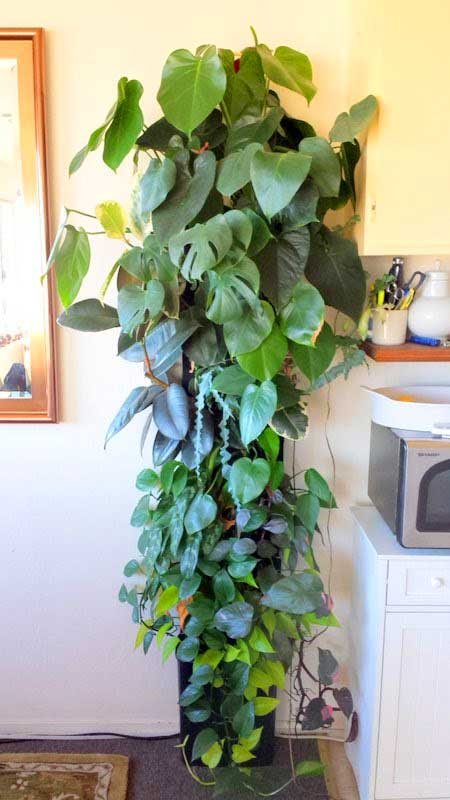 Florafelt® Compact Vertical Garden Kit with low-light tropicals.