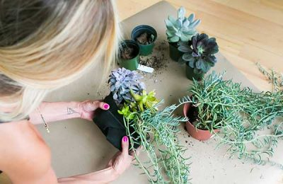 A mix of succulents in a Florafelt® Root Wrap (photo: Jamie Sangar)