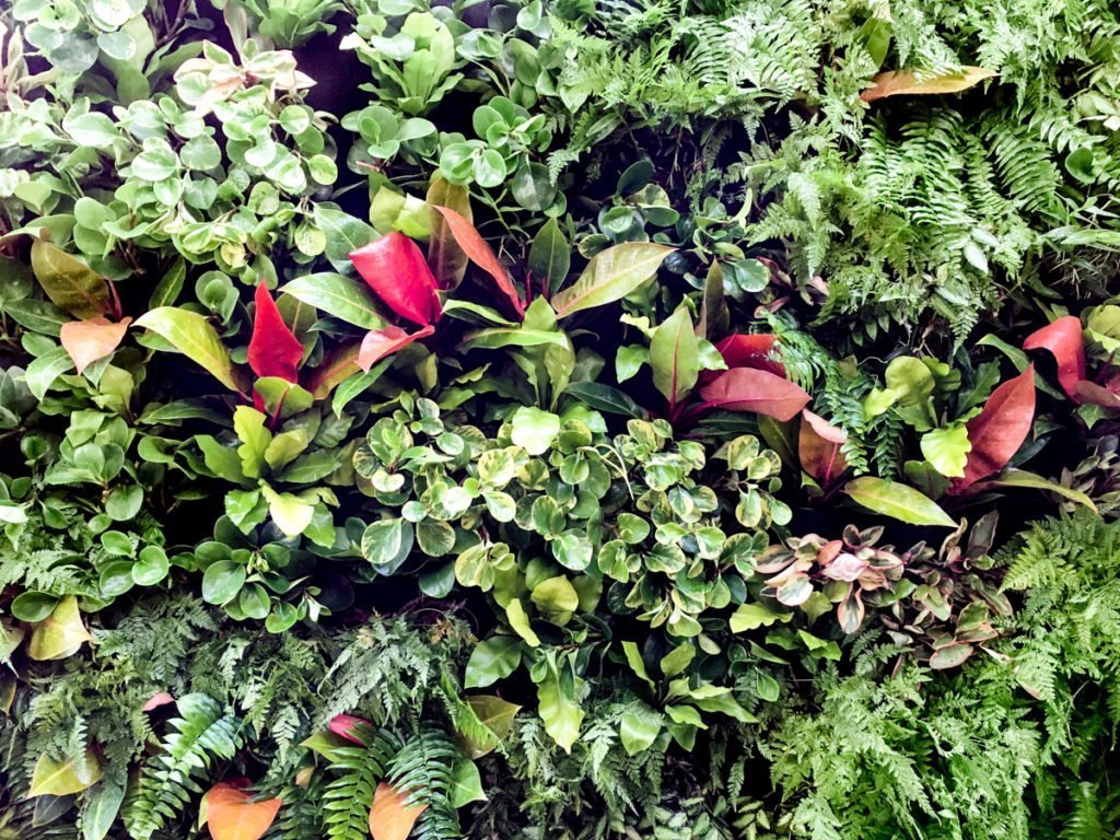 Florafelt Living Wall by Seth Stottlemyer of Oasis Gardenscapes in Sarasota, Florida.