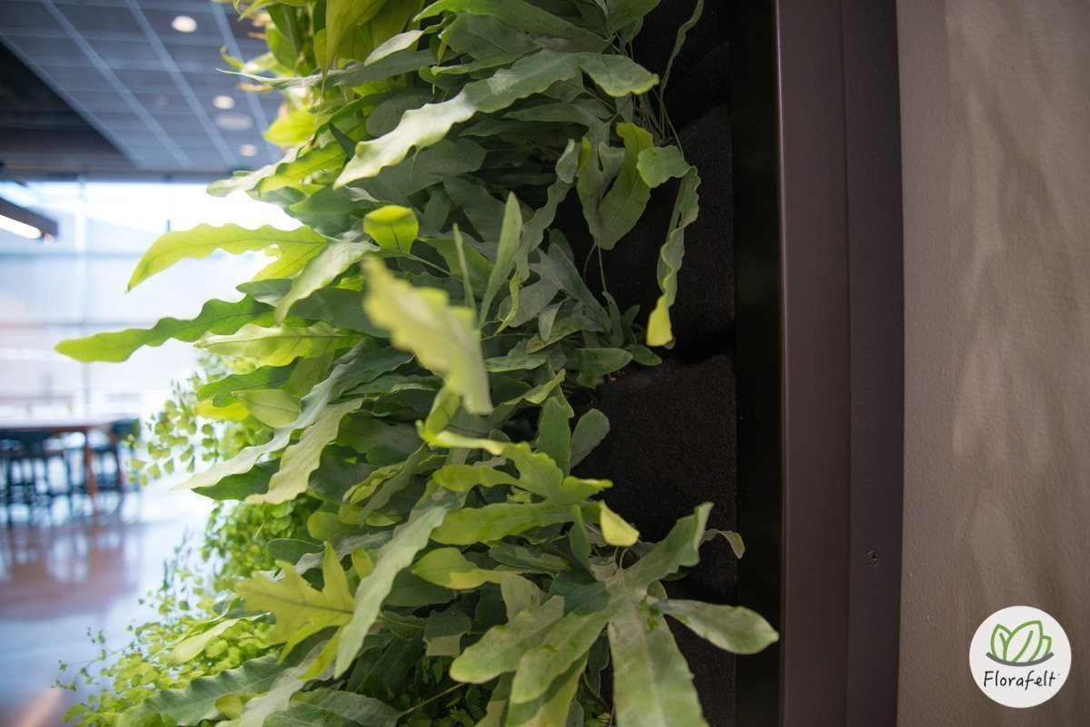 Florafelt living wall for Google by Planted Design.