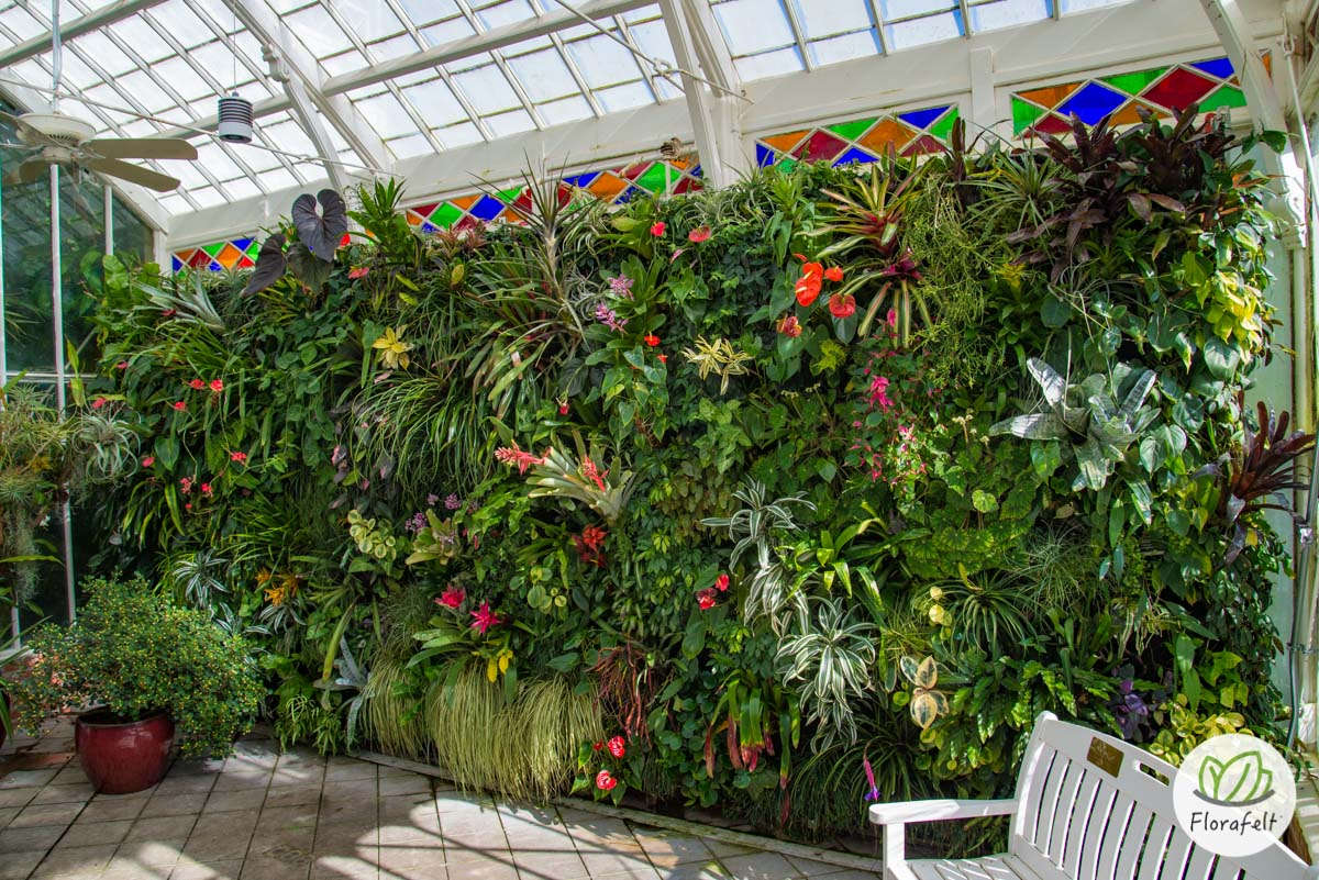 Florafelt Living Wall at San Francisco Conservatory of Flowers. Maintained by volunteer Steph Kantorski.
