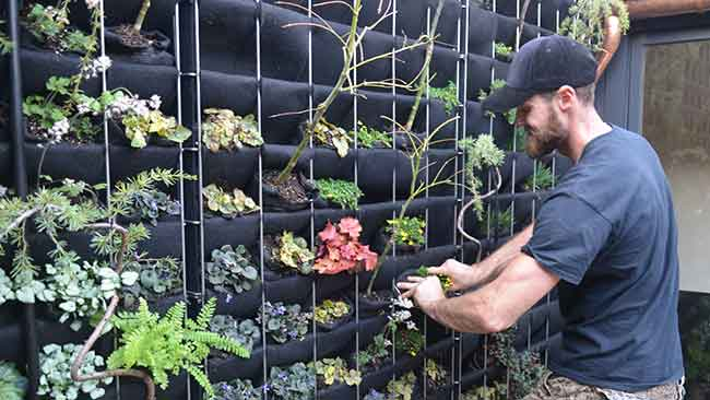 Lindsey Graham of Living Green Design planting a Florafelt Pro System vertical garden.