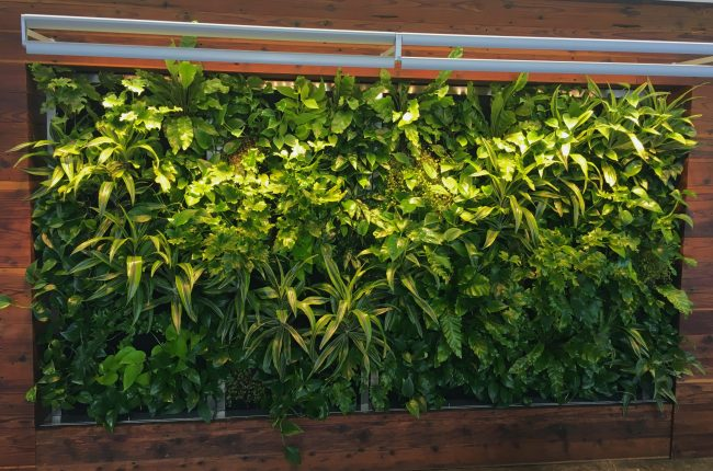 Living Wall for Buro Happold Los Angeles by Mitzy Florals. Made with Florafelt pocket panels.