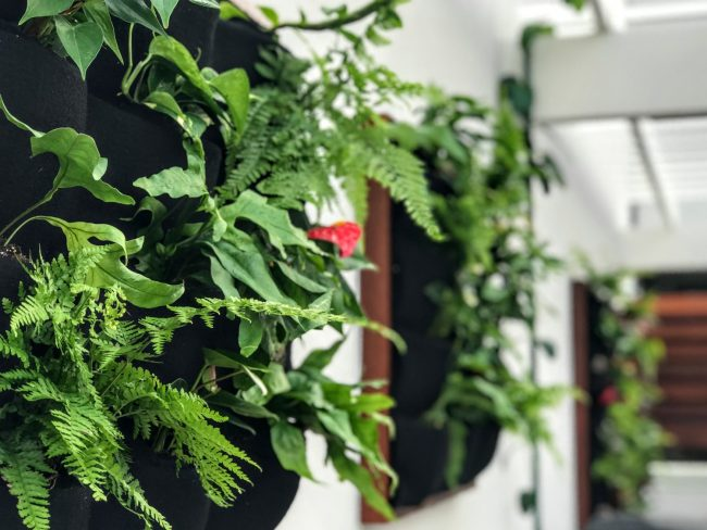 Hand-made living walls by Kieselbach Woodworks Hawaii. Made with Florafelt Pocket Panels.
