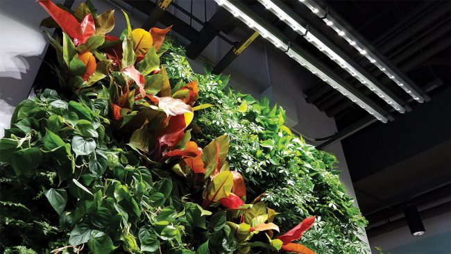 Google Sunnyvale living wall by Planted Design. Made with Florafelt Pockets.