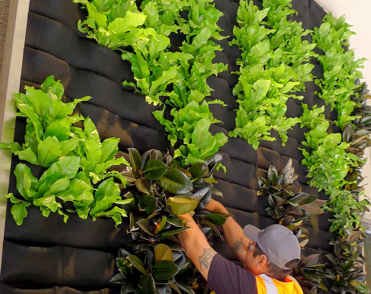 Plants On Walls Our Patented Florafelt Pleated Pocket Living Wall Systems Are An Elegant Solution For Growing Lush Living Walls Anywhere From Homes And Workplaces To Entire Facades Lightweight Easy And