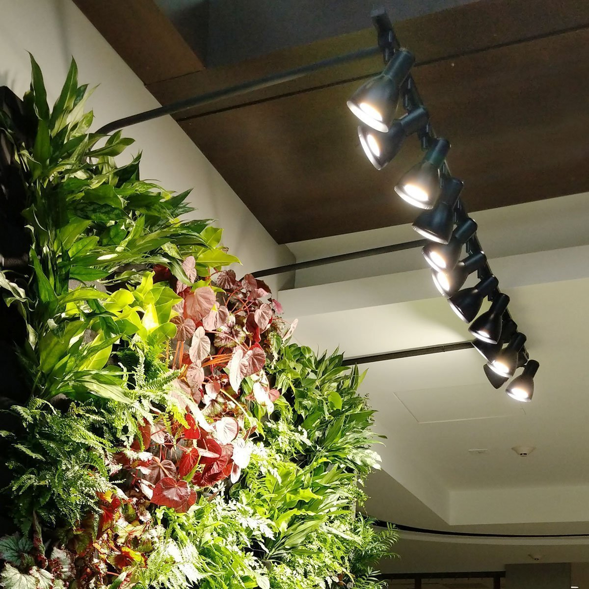 Lighting Guide For Living Walls Plants On Walls
