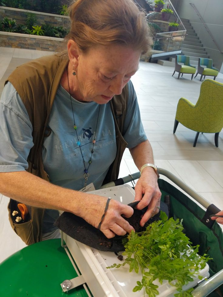 Jamie Veljkov of Outside-In Plant Service uses a Root Wrap to maintain the Florafelt Living Wall at the Tanner Medical Center.