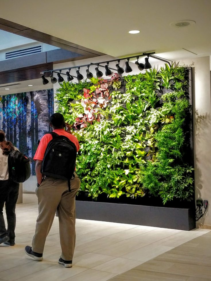 Florafelt Pocket Panel Custom Living Wall for Tanner Medical Center in Carrollton, Georgia.