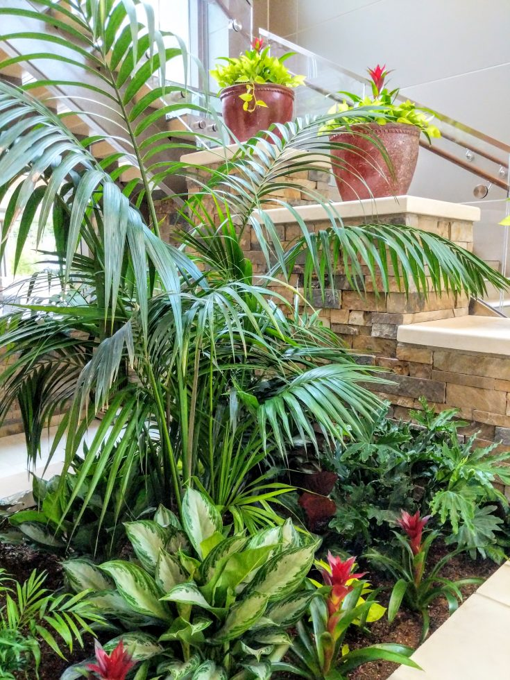 Lush tropical planter arrangements by Jamie Veljkov of Outside-In Plant Service for Tanner Medical Center in Carrolton, Georgia.