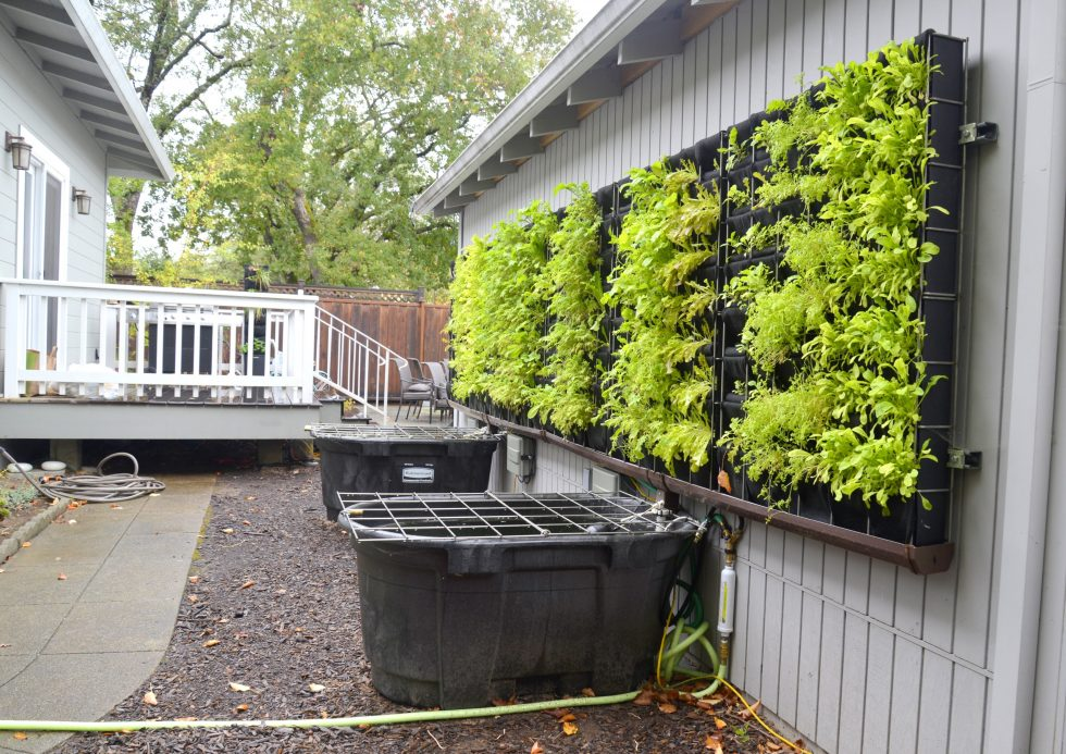 Florafelt Pro System aquaponic test garden by Chris Bribach of Plants On Walls in Sonoma, California.